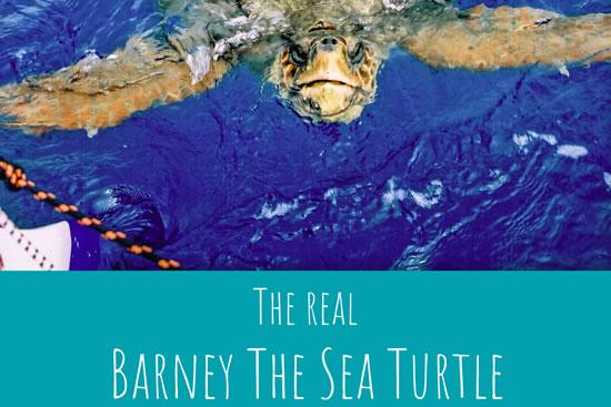 Debra Searle MVO MBE - Barney the Sea Turtle Necklace